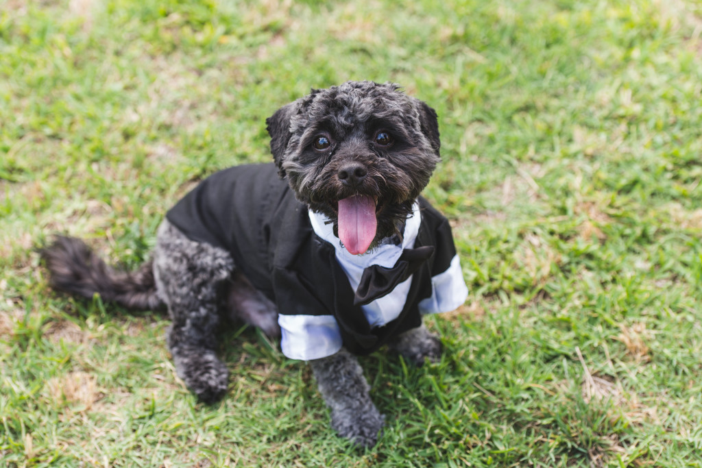wedding dallas photographer groomsmen dog ring bearer tuxedo