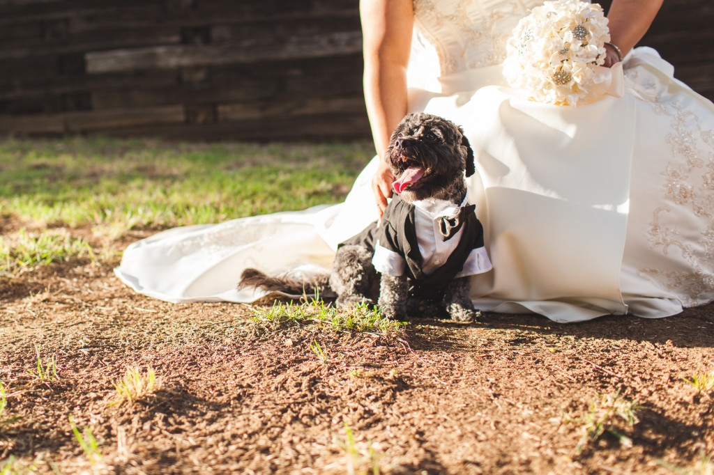 wedding dallas photographer dog and bride