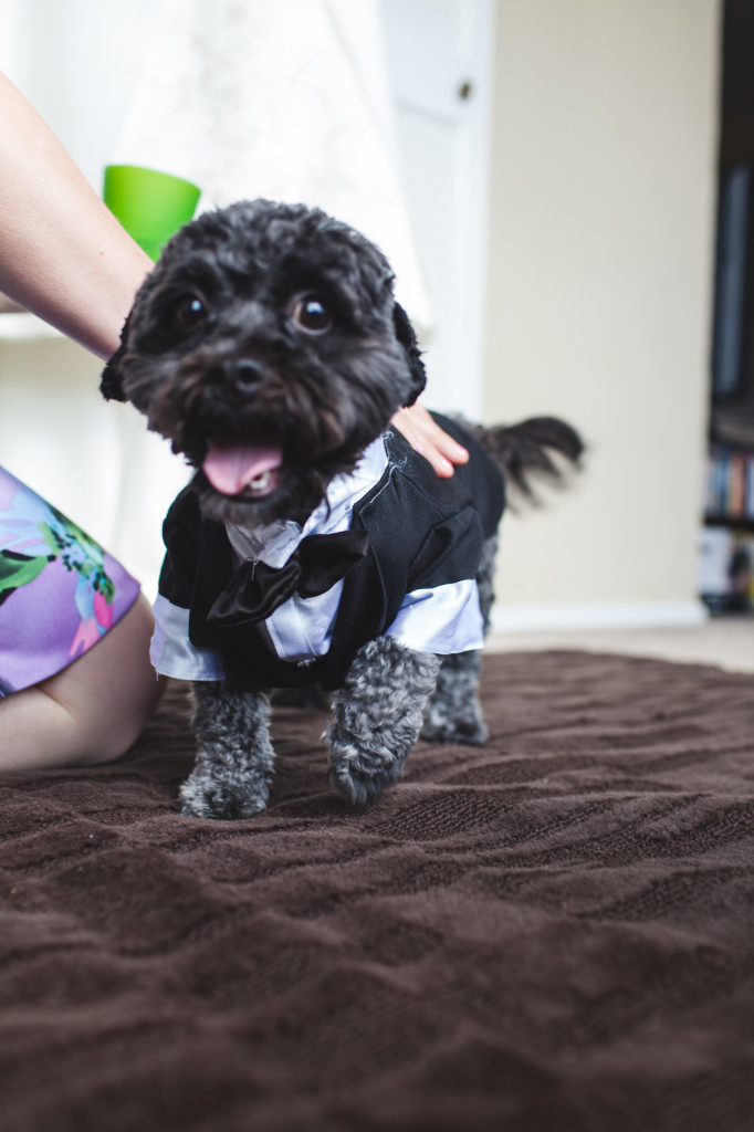 wedding dallas photographer dog ring bearer